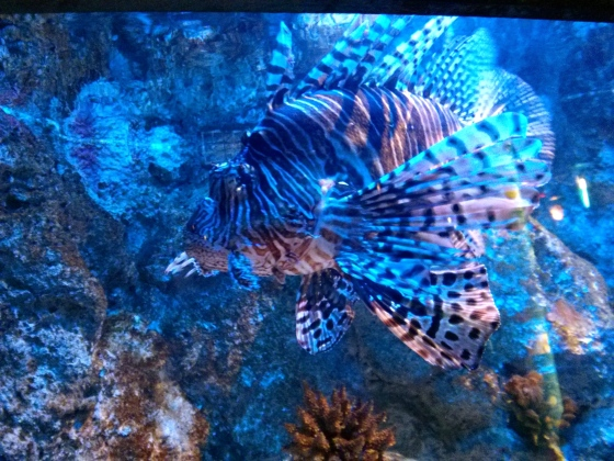 Pretty zebra-like fish!
