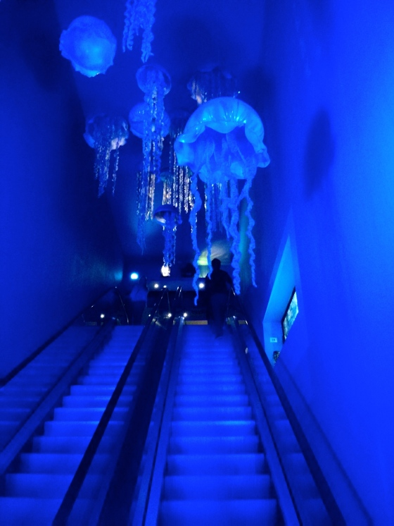 Jellyfish escalator