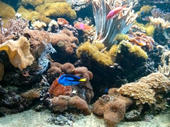 Bright neon fish