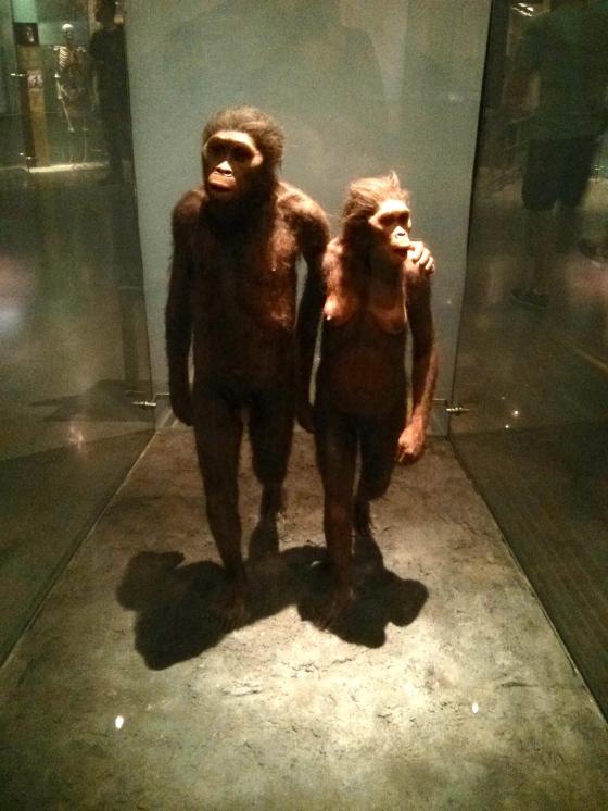 Human Origins Hall