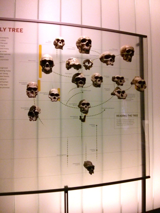 """Our Family Tree"", Human Origins Hall"