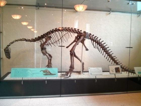 Prosauropod