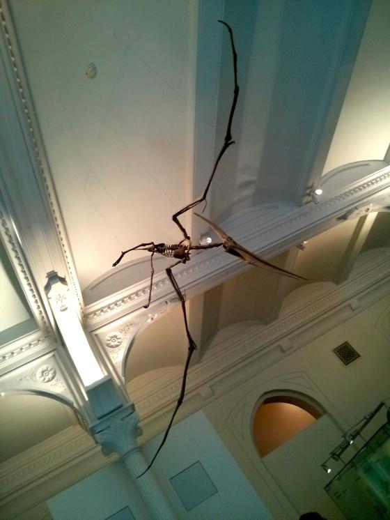 "Pteranodon ingens ""toothless flyer"""