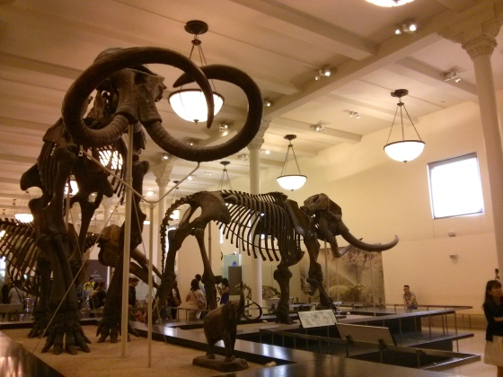 Mammuthus jeffersonii on the left; Mammut americanum on the right