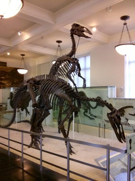 """Anatotitan copei """"giant duck"""""""