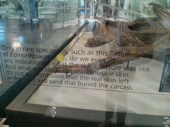 Because of this dinosaur mummy, we have an idea of what the skin's texture was like!