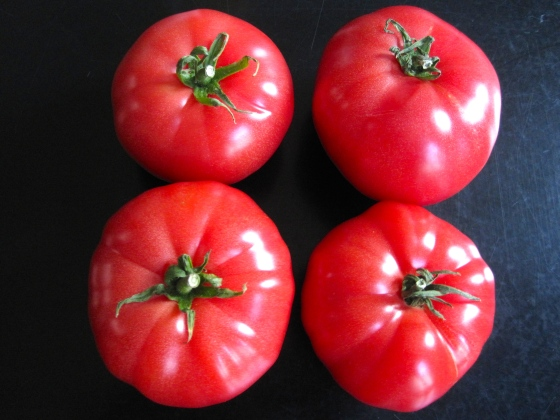 Juicy, Belgian tomatoes