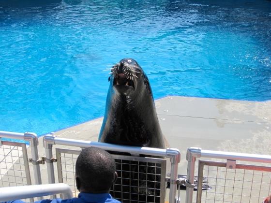 NYC Aquarium