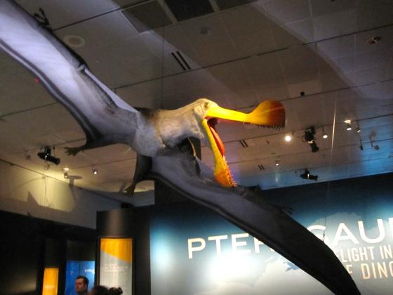 Tropeognathus model
