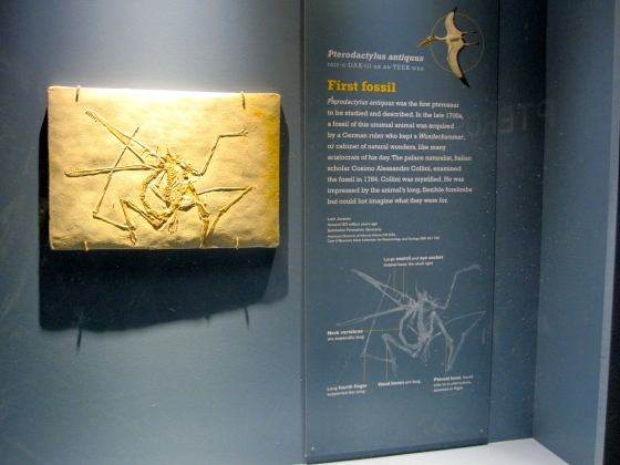 First pterosaur fossil