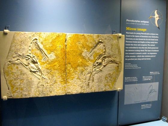A rare, complete fossil