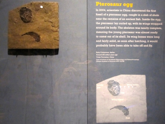 First pterosaur egg fossil