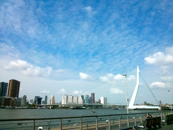 View of the Erasmus Bridge which we just biked over from the Wilhelmina Pier