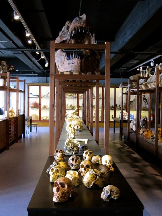 So many skulls!