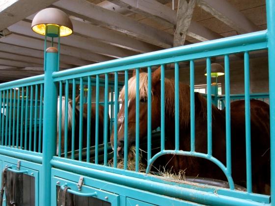 One of the Carlsberg horses