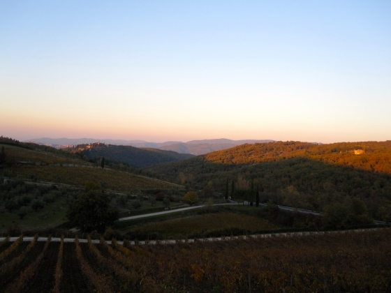 Sun setting over the vineyards